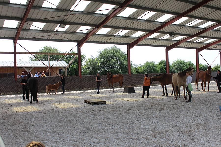 Pensions chevaux en Mayenne (53)